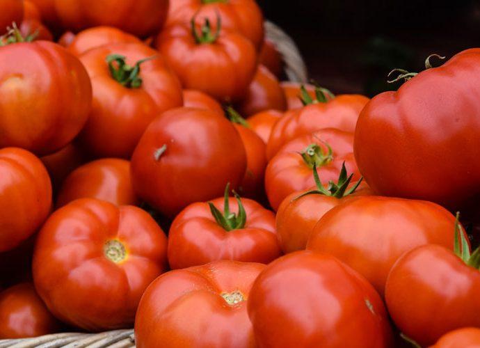 Wie gesund sind Tomaten eigentlich?